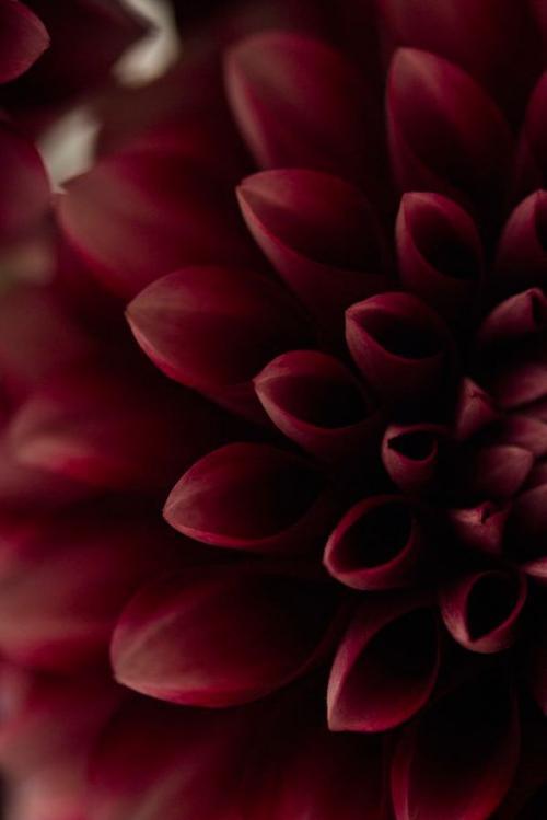 Цвет Марсала в природе. Всё, что нужно знать о цвете Марсала