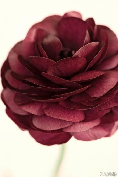 Какой цвет марсала на самом деле. Что означает слово «марсала» и каким образом оно стало таким известным?