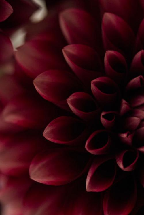 Цвет Марсала. Всё, что нужно знать о цвете Марсала